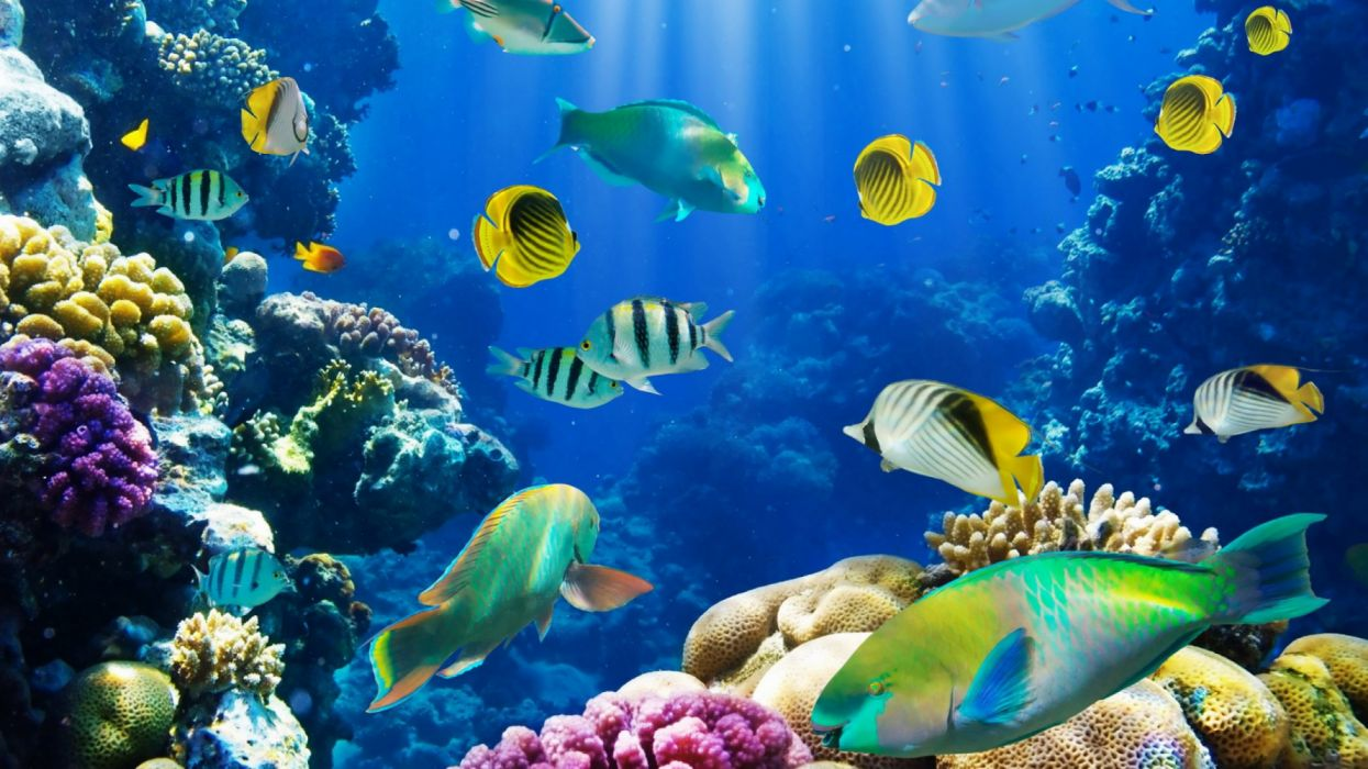 Tropical Fish Underwater Sea Ocean Sealife Wallpaper
