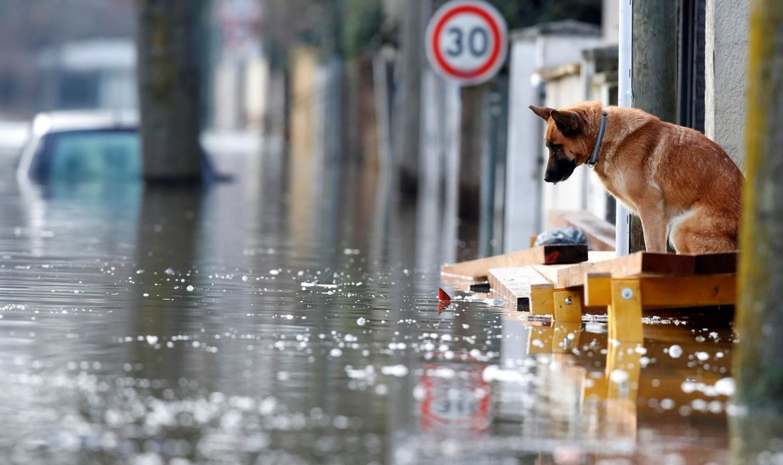 Dog in Villeneuve-Saint-Georges wallpaper