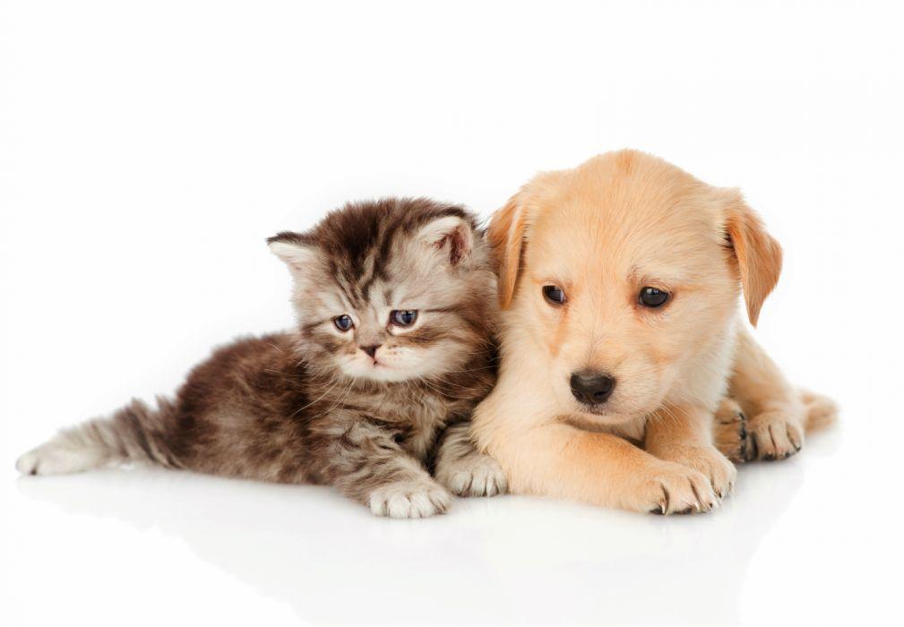 Animal Baby Animal Cute Dog Kitten Pet Puppy Wallpaper 6256x4341 1198011 Wallpaperup