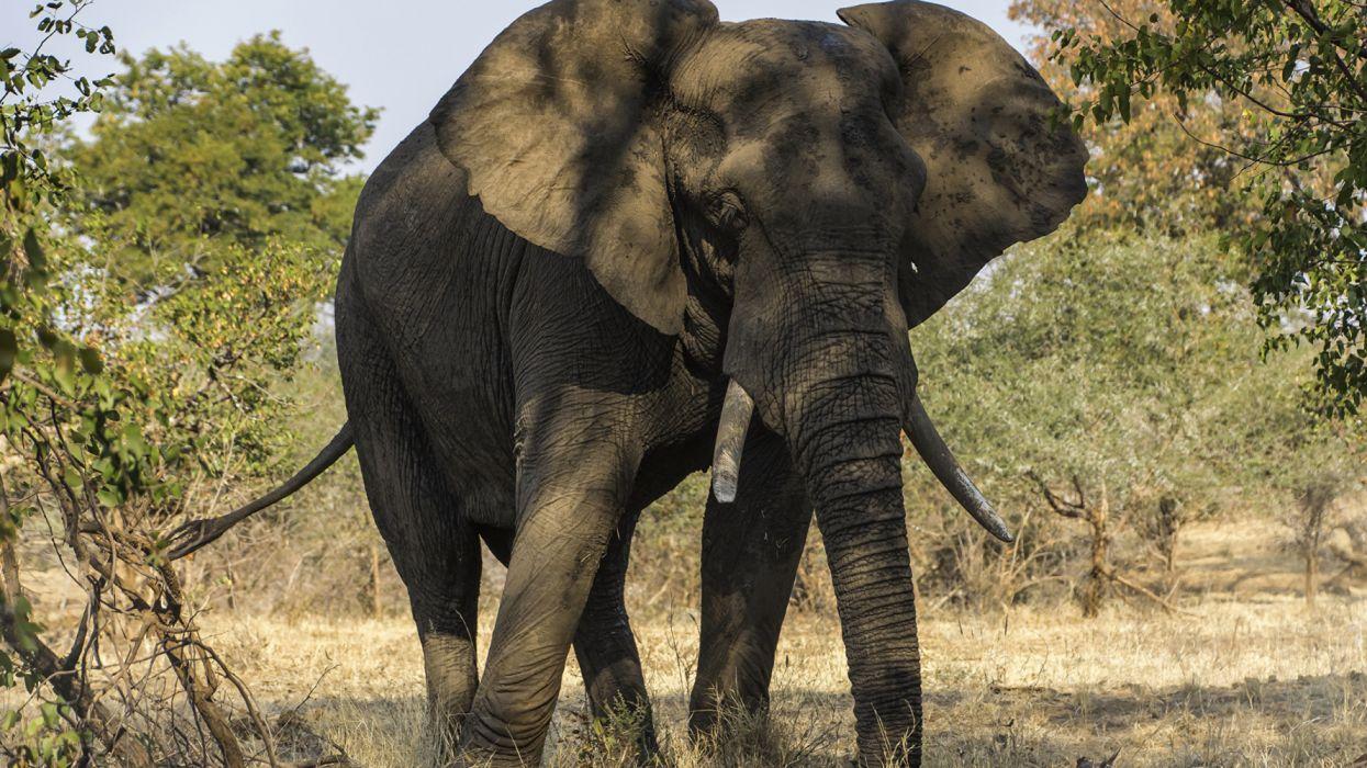Elephants animales paquidermo anciano wallpaper