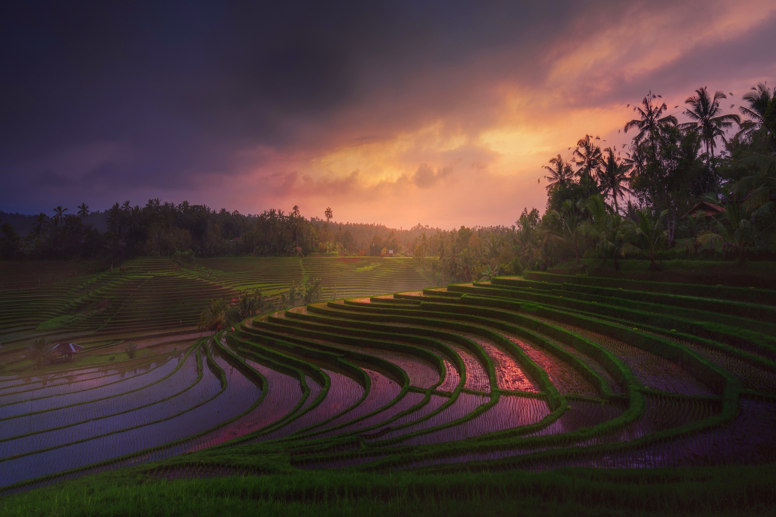 Nature rice terrace wallpaper 2500x1667 1206085 for Terrace nature