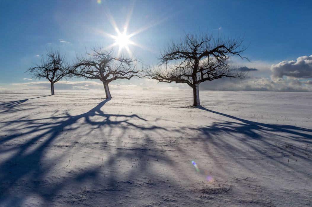 Nature Sky Snow Sun Tree Winter wallpaper