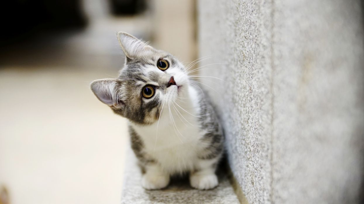 Free Wallpapers Baby Animals