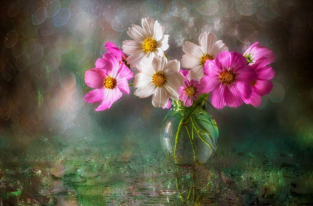 Bokeh cosmos flower pink flower vase white flower wallpaper bokeh cosmos flower pink flower vase white flower wallpaper mightylinksfo