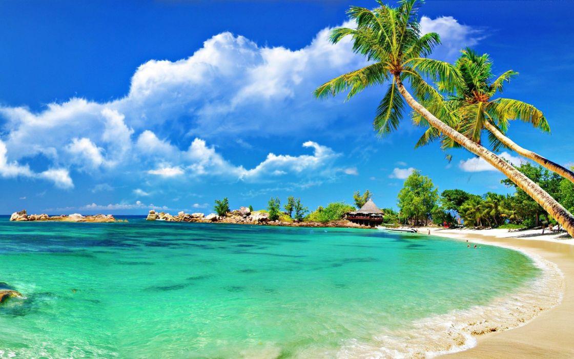 playa mar naturaleza palmeras cielo nube wallpaper