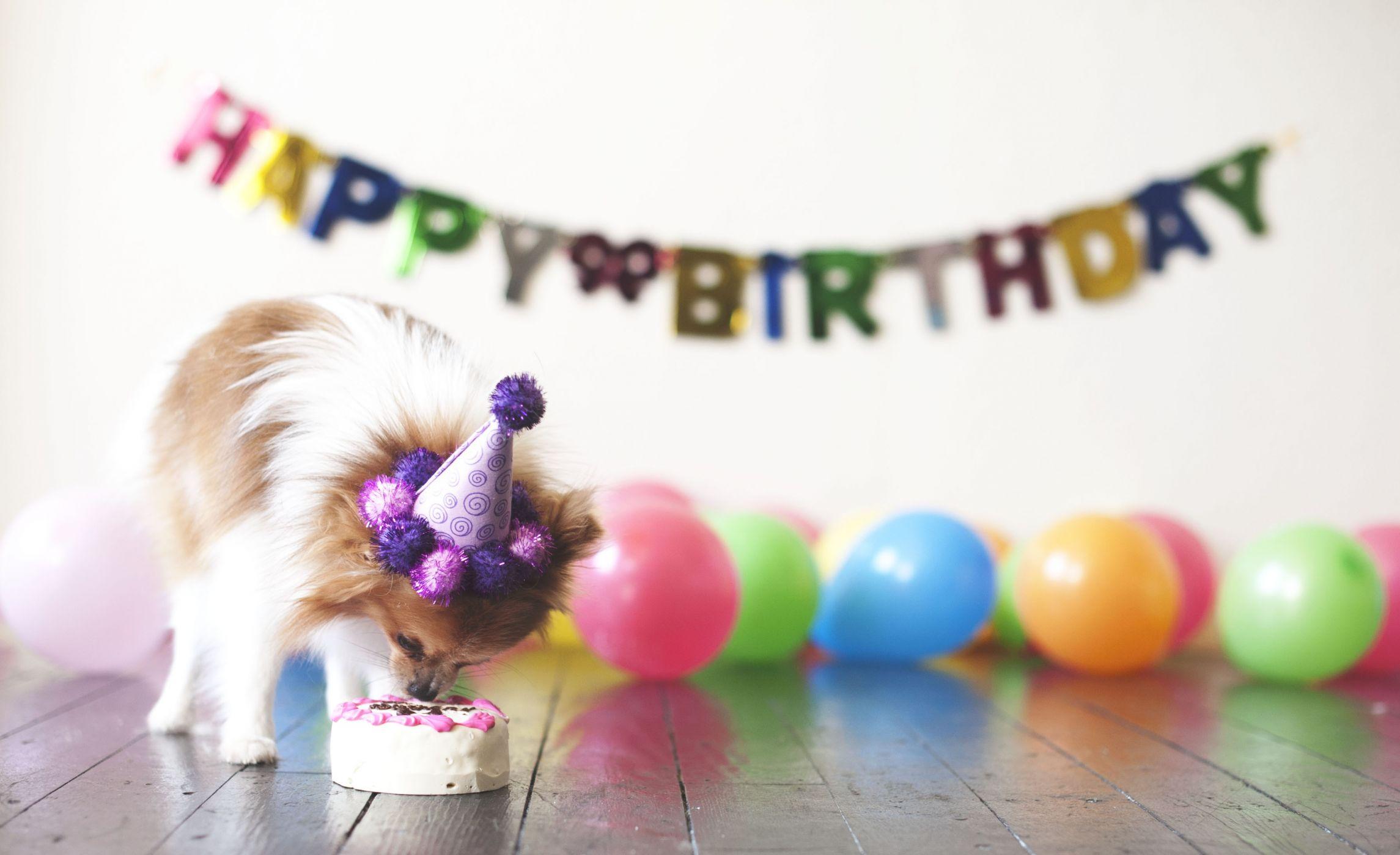 Картинки с днем рождения с зверями
