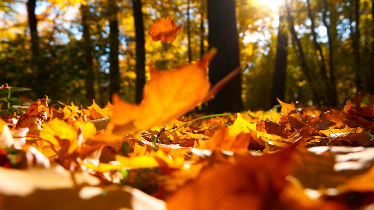 Autumn Falling Leaves Ground Autumn Fall Home Decor