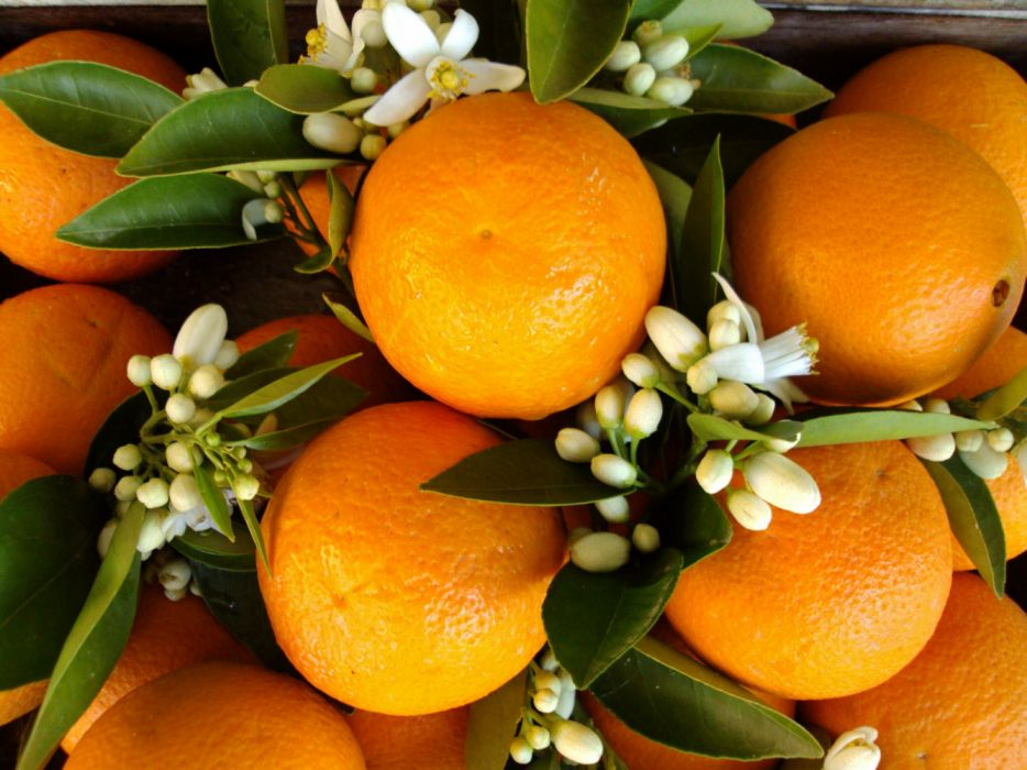 naturaleza frutas naranjas azahar hojas wallpaper