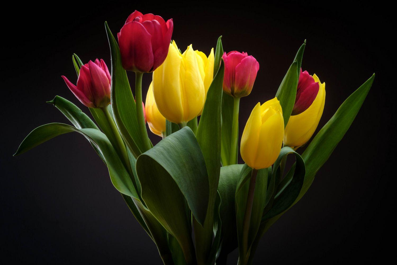 тюльпаны на темном фоне картинки вам ознакомиться