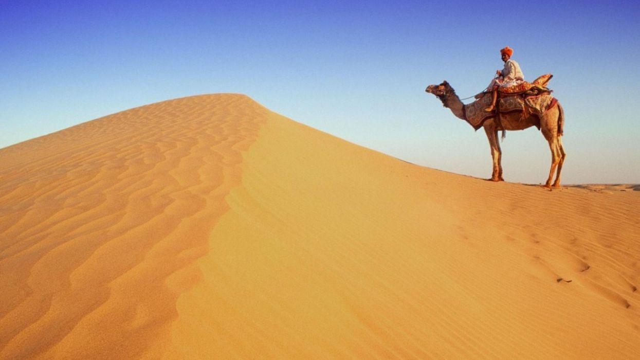 beduino camello dunas desierto naturaleza wallpaper