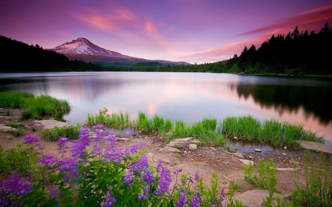 lago purpura flores naturaleza bosque wallpaper