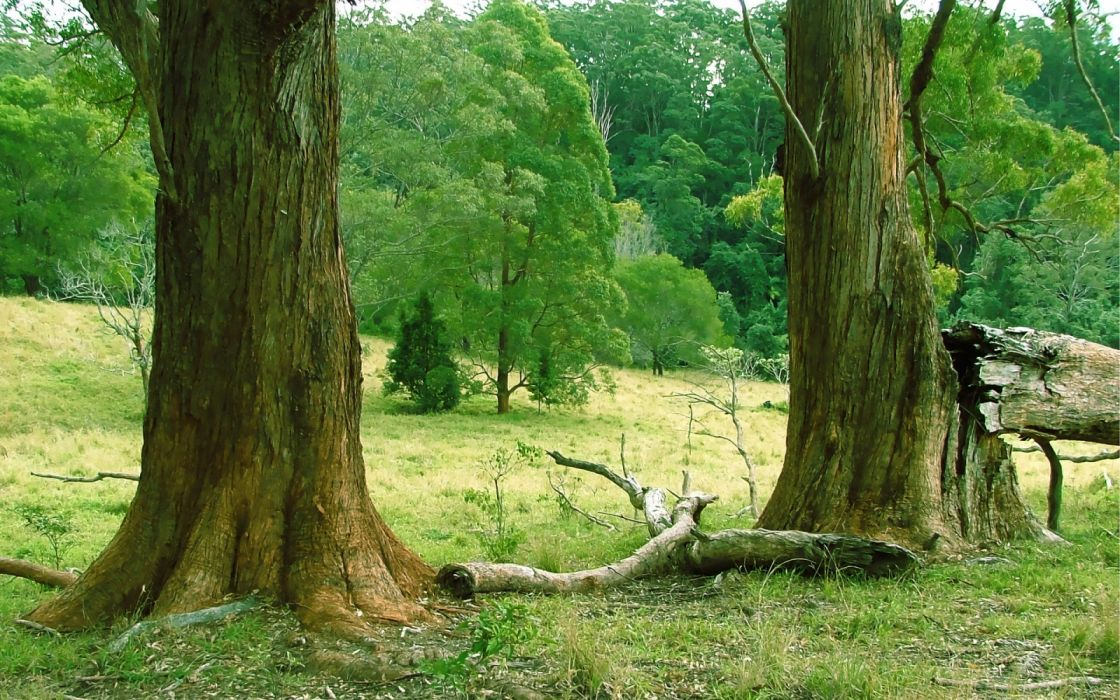 arboles bosque tronco naturaleza wallpaper