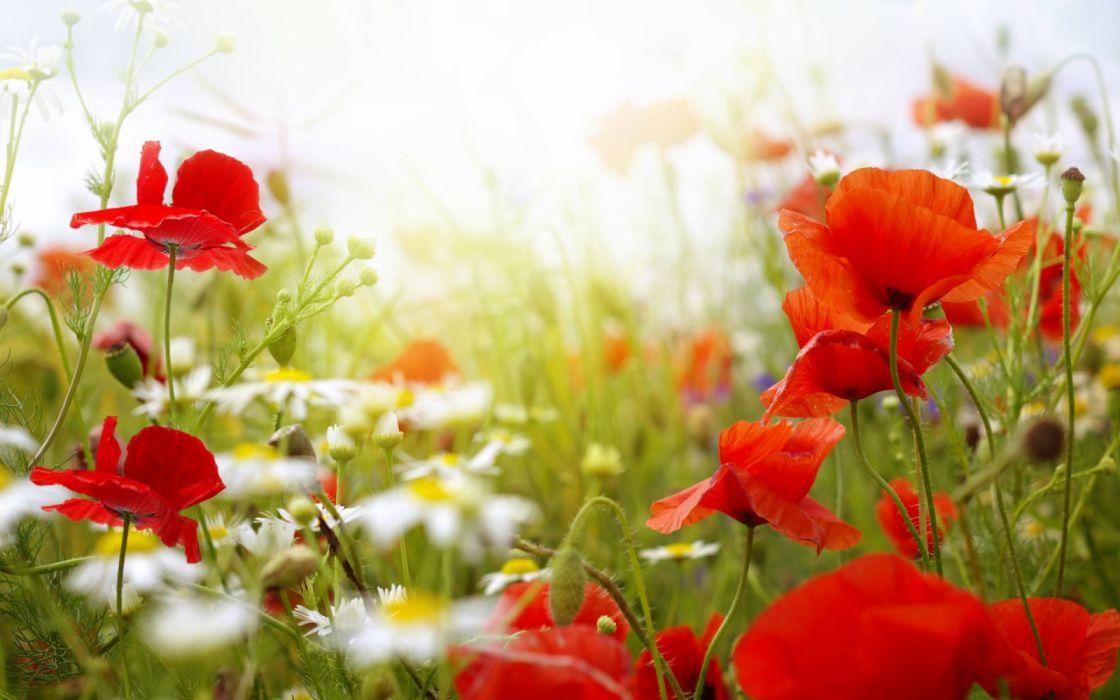 Flower Background High Definition Wallpaper 16345 Wallpaper 2560x1600 1260023 Wallpaperup