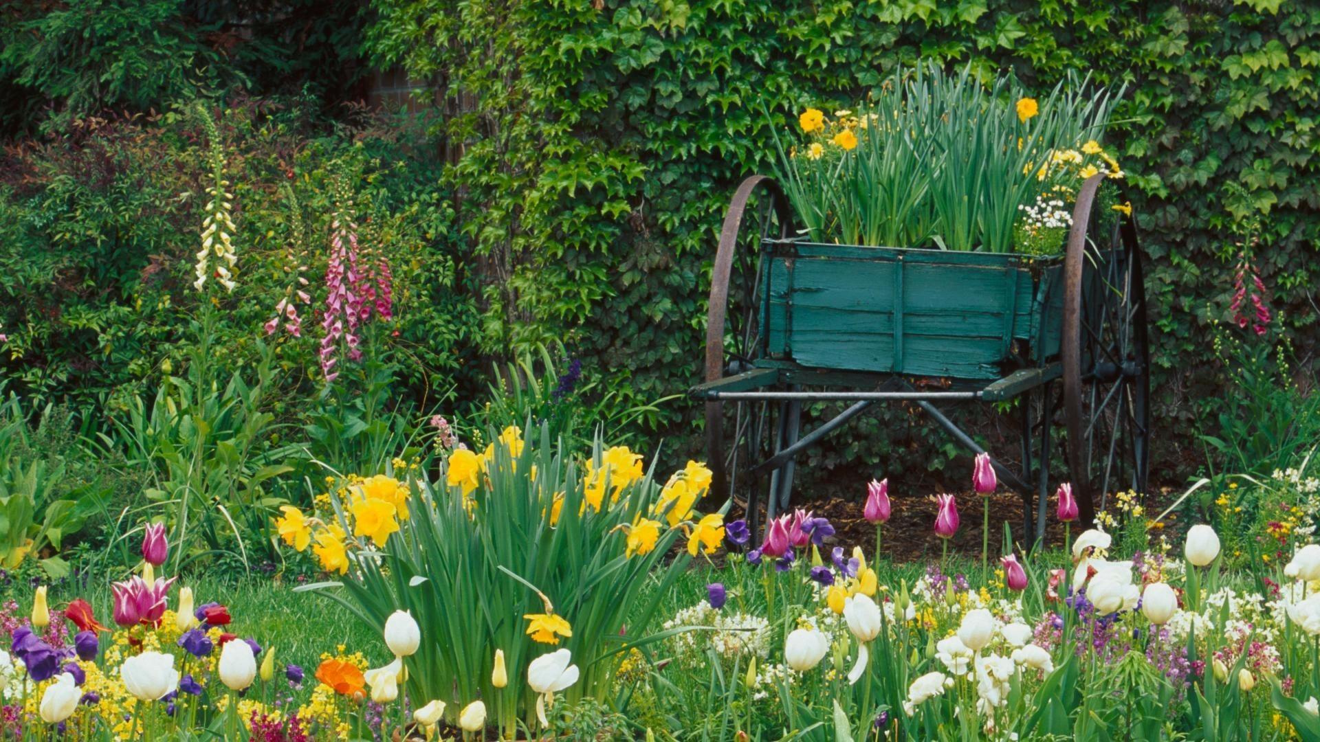 Beautiful Flowers Garden Nature Wallpaper   1920x1080   1274524    WallpaperUP