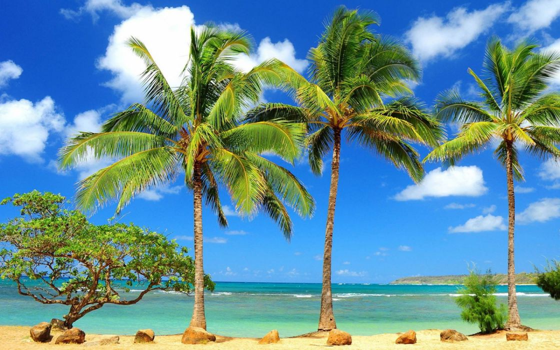 palm trees sea beach nature wallpaper