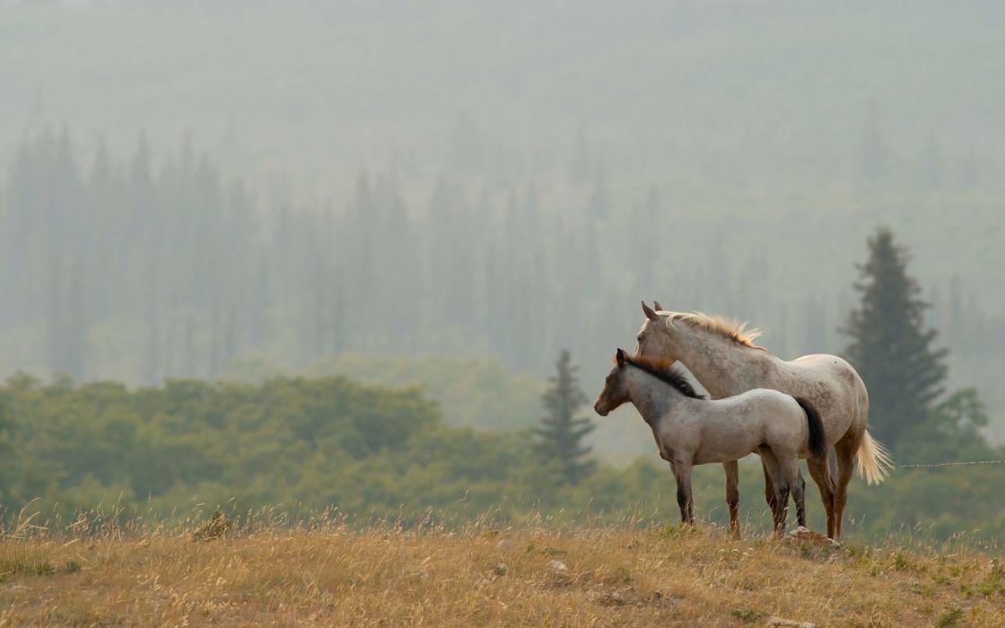 animals forest horses nature widescreen wallpaper