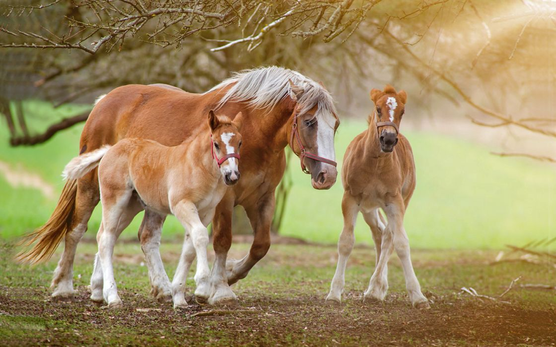 trees animals horses nature widescreen wallpaper