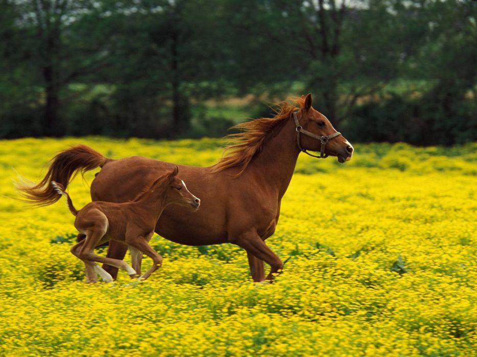 trees animals horses nature flowers beautiful wallpaper