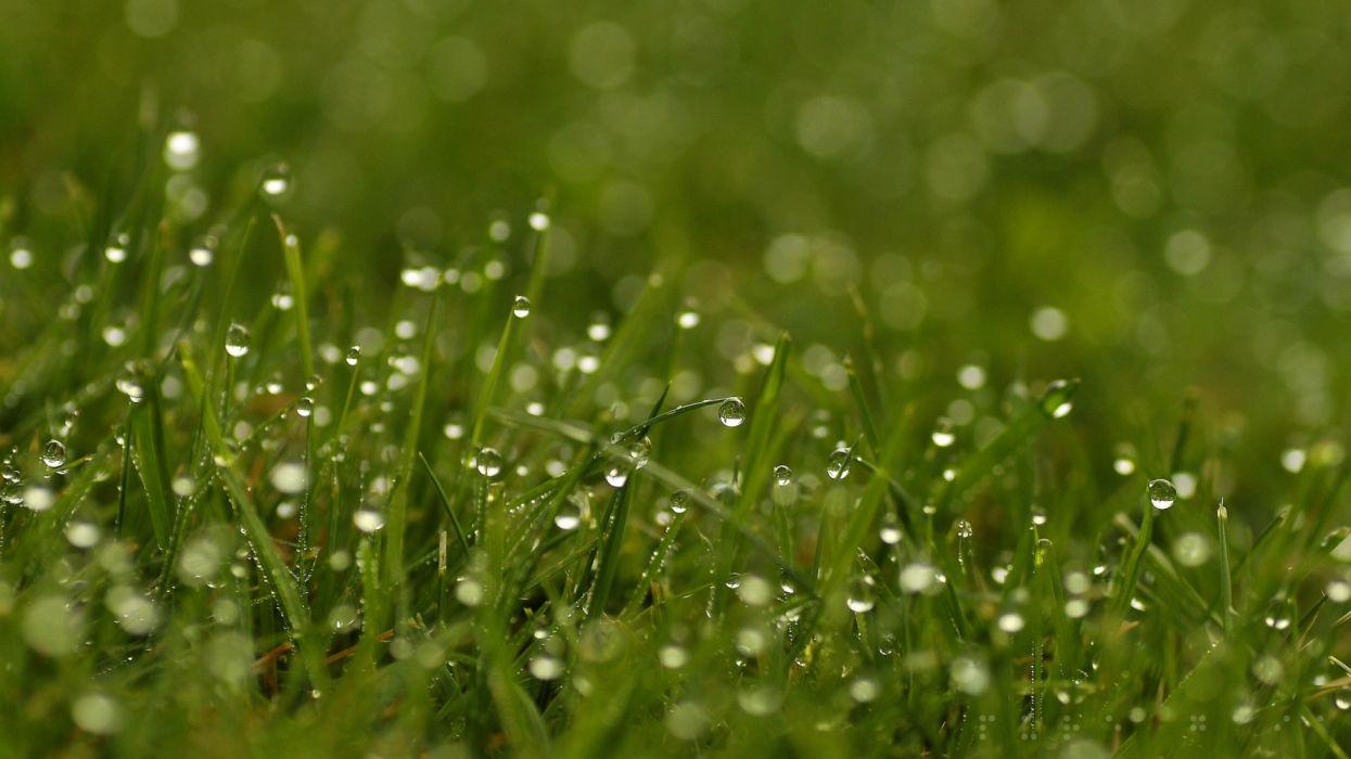 grass dew drops bright nature wallpaper | 2560x1440 | 1300175