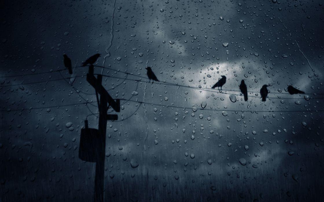 lluvias tormenta nubes negras cuervos cables wallpaper