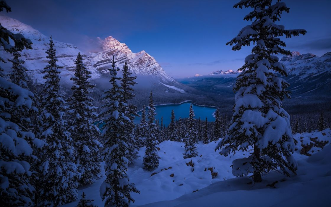 Winter Mountains Scenery Canada Peyto Lake Spruce landscapes wallpaper