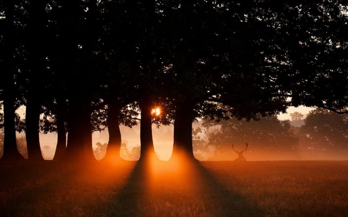 trees animals sky nature sun fog widescreen wallpaper