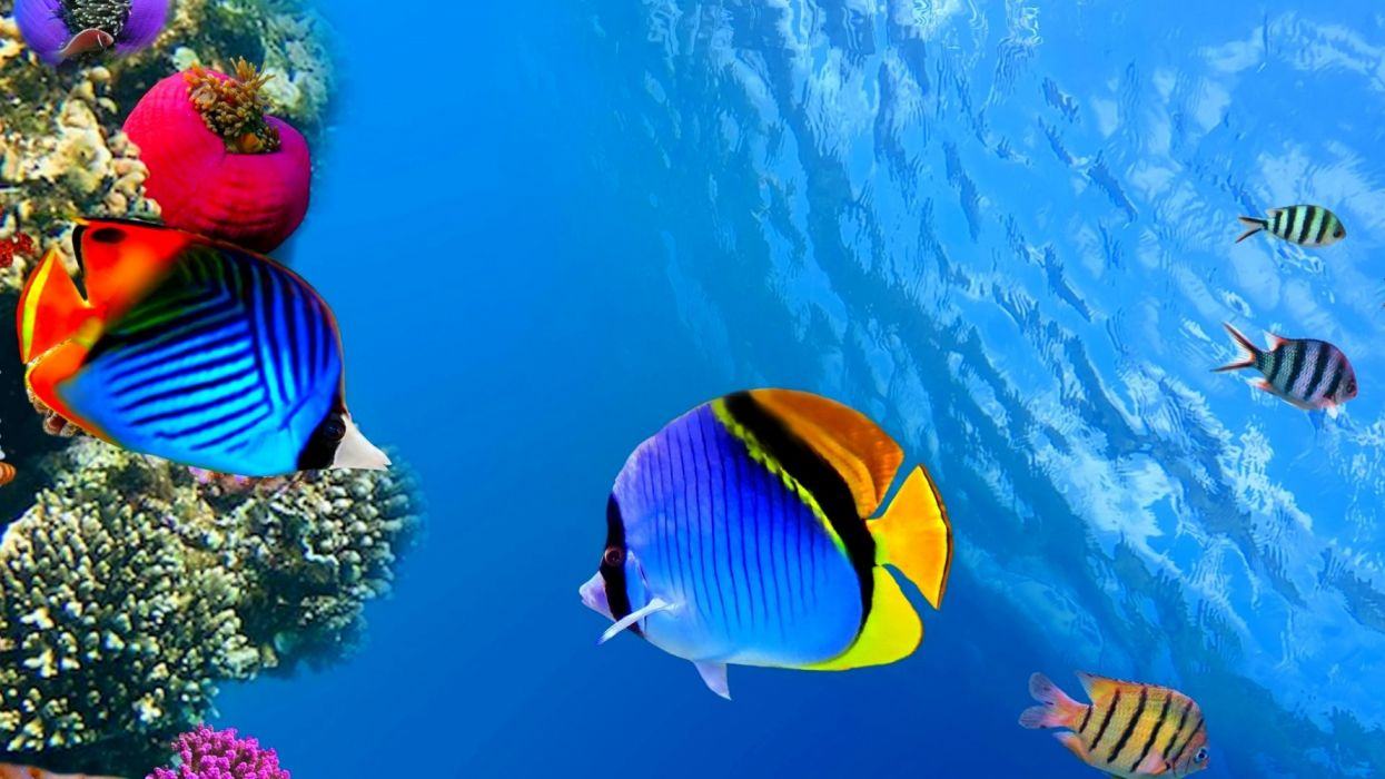 Peces arrecife colores animales wallpaper | 1920x1080 ...