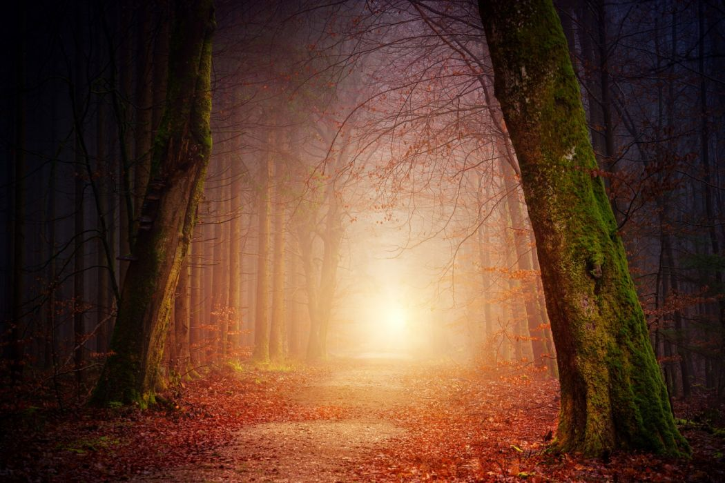 nature forest trees light sun mist foggy sunset shadow autumn mood branch landscape away path aesthetic bare branches leaves leaves wallpaper
