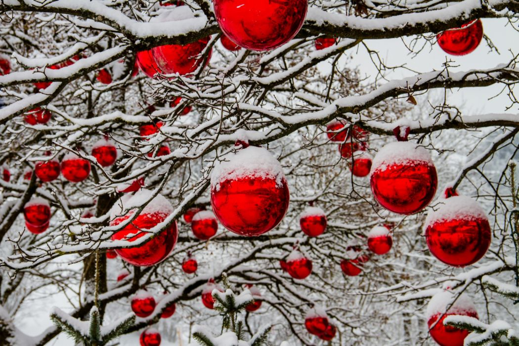 christmas winter tree snow balls red tree decorations christmas balls advent decoration red balls nature photography nature landscape wallpaper