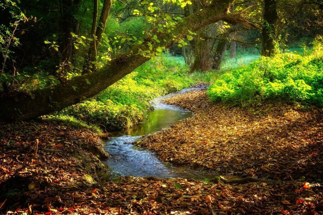 landscape river bach stream autumn leaves color splendor jungle nature forest idyllic water wallpaper