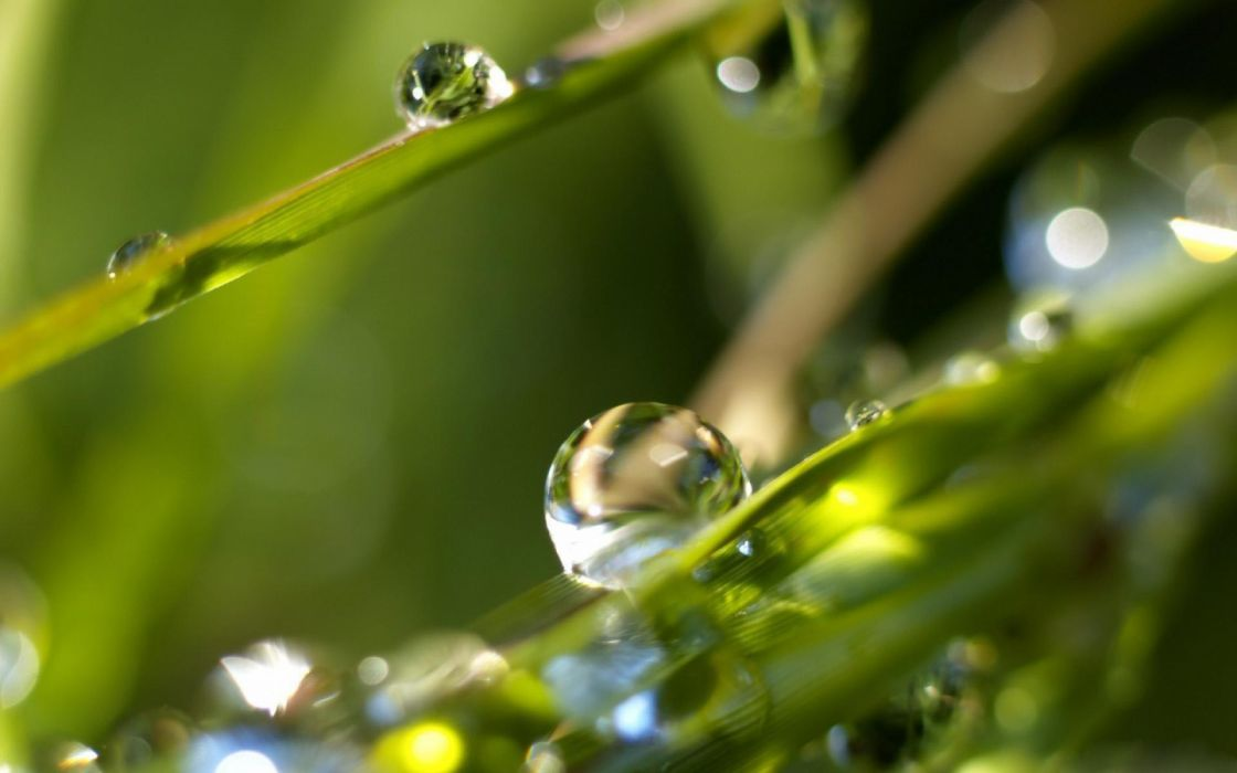 drops dew leaves nature wallpaper