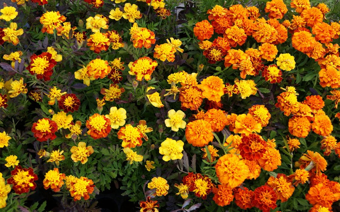 naturaleza jardin flores amarillas wallpaper