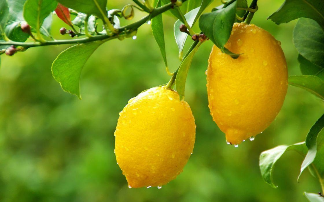 frutas limones naturaleza gotas agua wallpaper