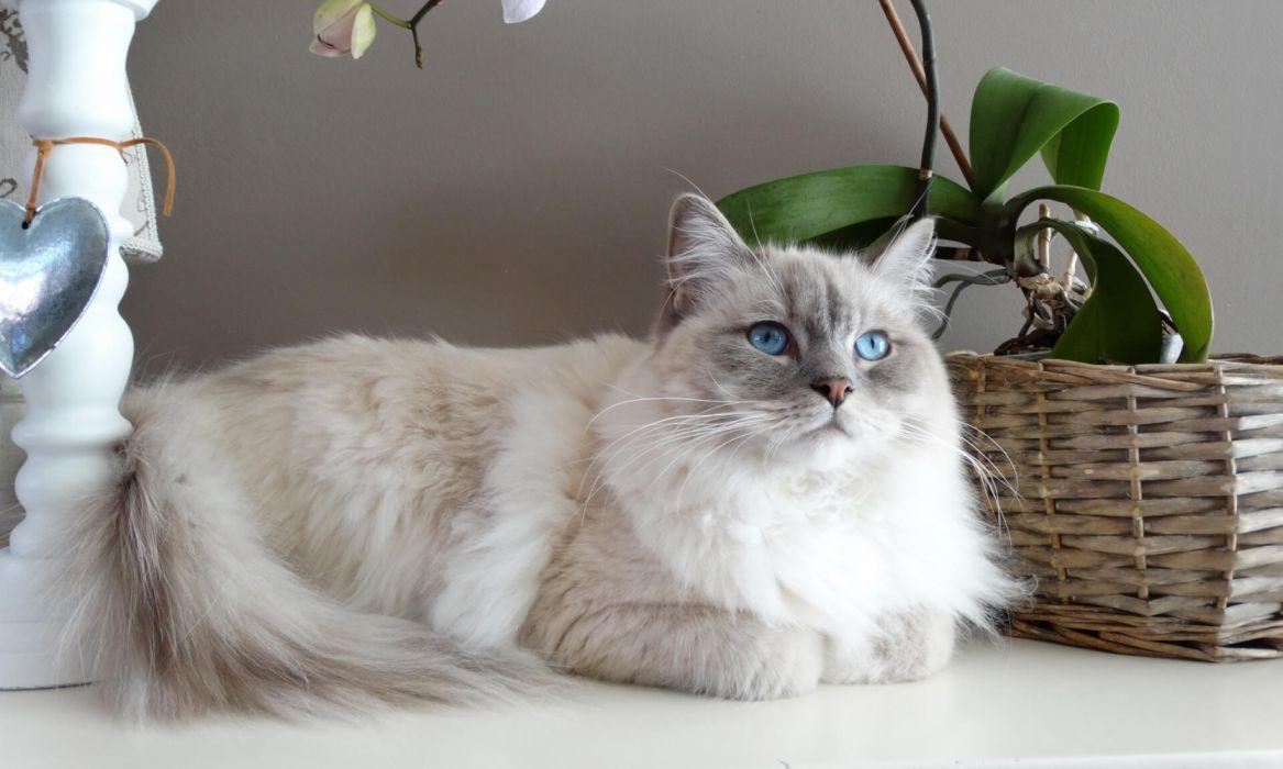 cats pets animals wallpaper