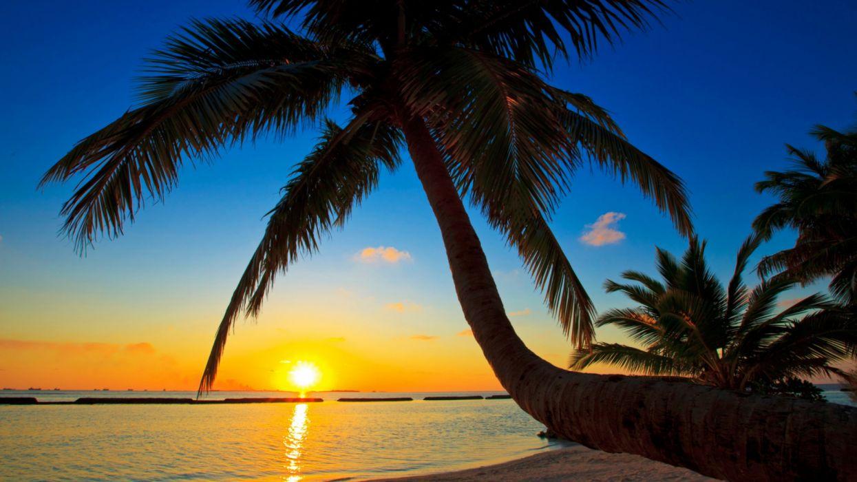 Palma Maldives Sunset Beach Sea Palm Tree Wallpaper 5120x2880