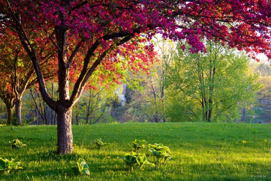 paisaje naturaleza arboles prado wallpaper