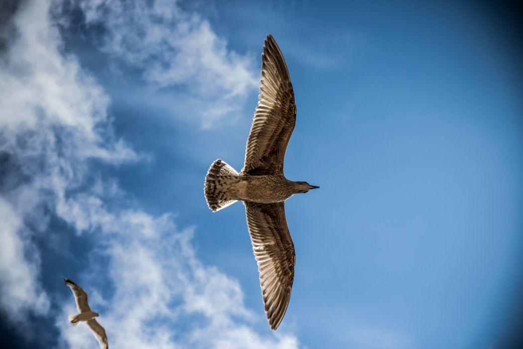 sea-gull wallpaper