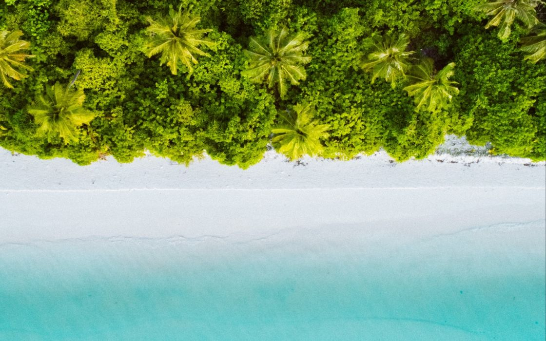 Palm Trees Ocean Aerial View Wallpaper 1440x900 1333049 Wallpaperup