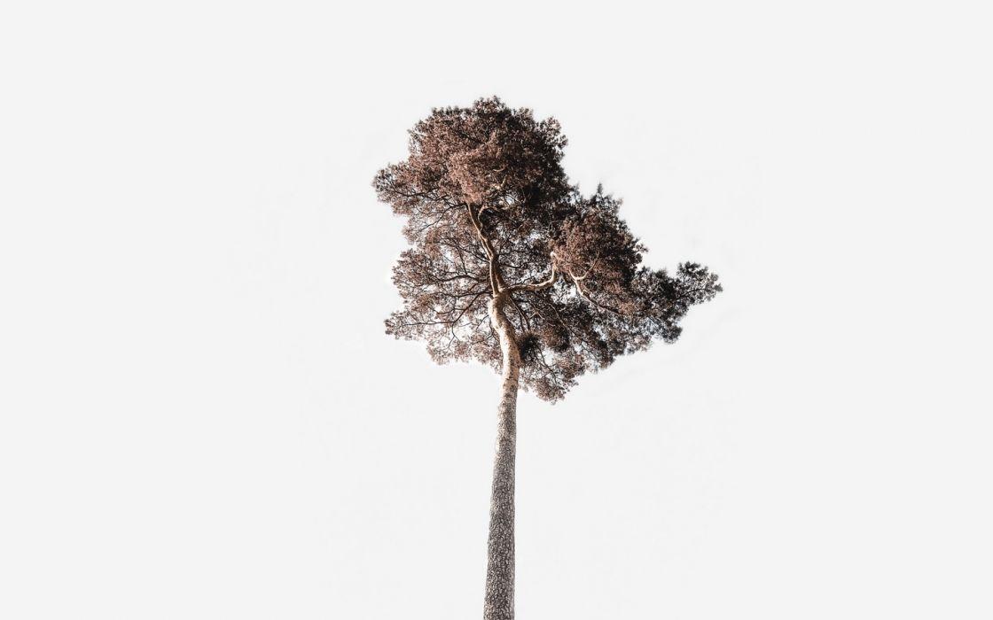 tree sky minimalism 144529 1440x900 wallpaper
