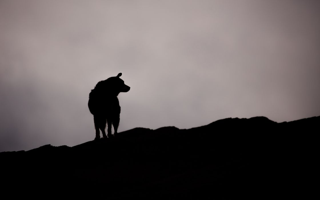 dog silhouette outlines 138692 1440x900 wallpaper