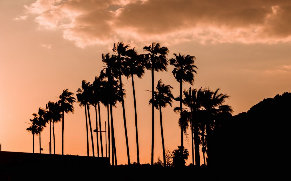 palm trees twilight outlines 138991 1440x900 wallpaper