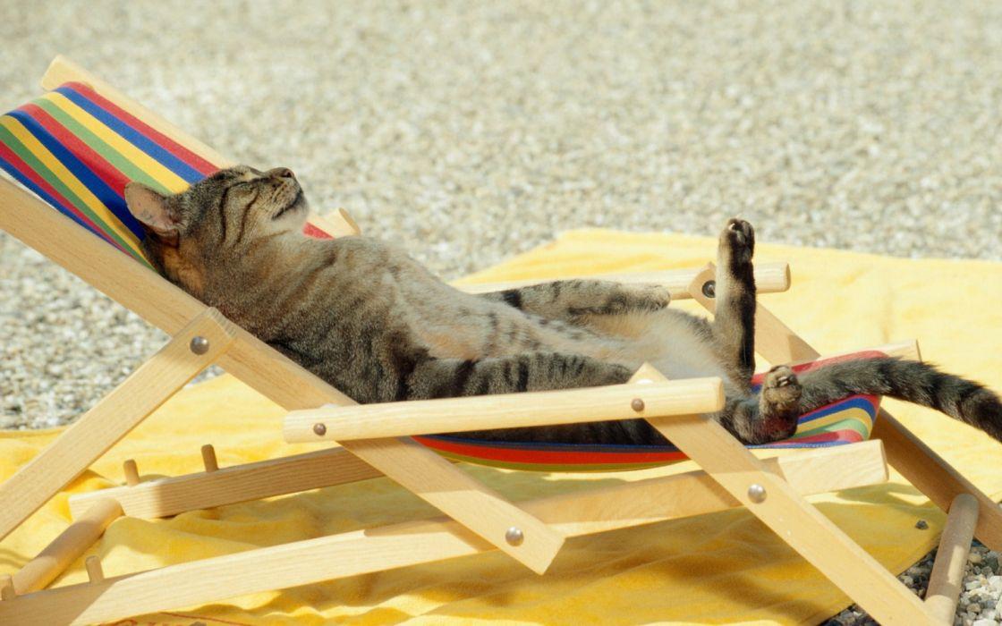 Cat sunbathing wallpaper