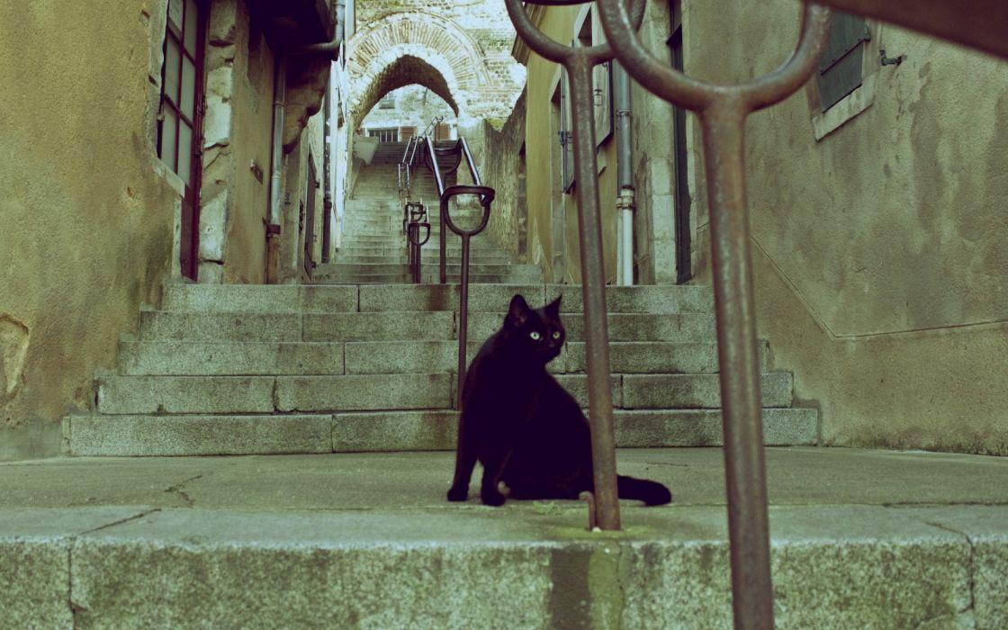gato negro ciudad escaleras calle wallpaper