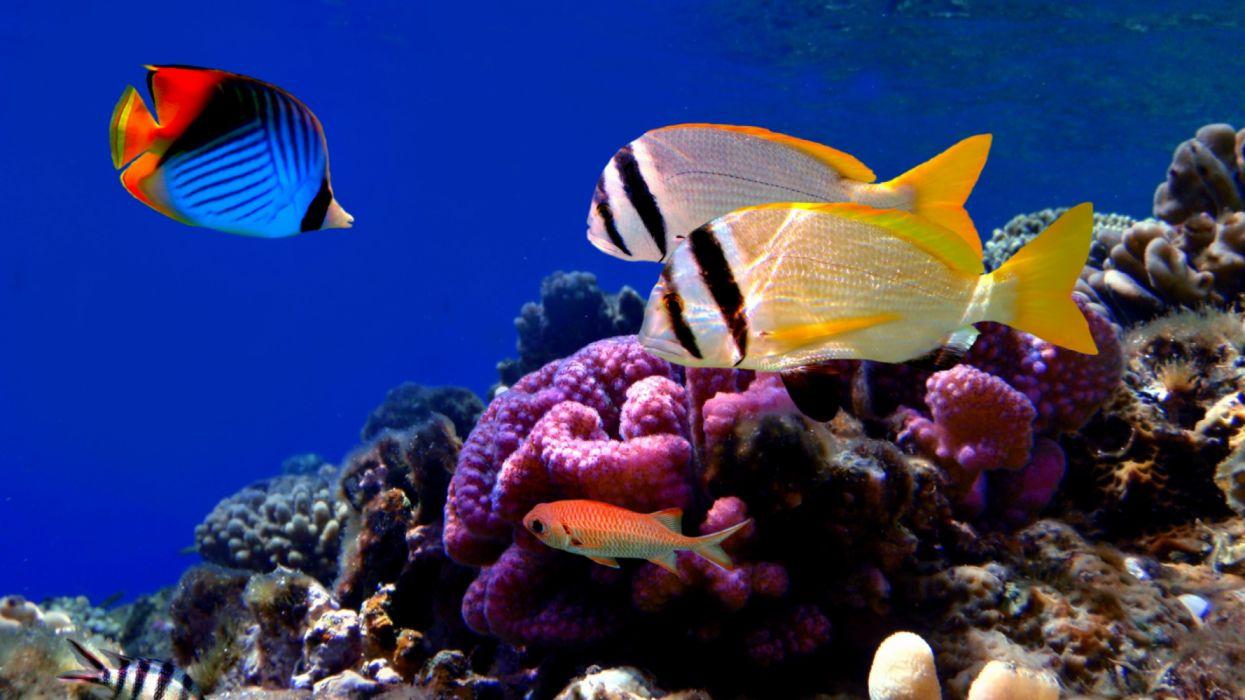 animales peces tropicales arrecife coral wallpaper