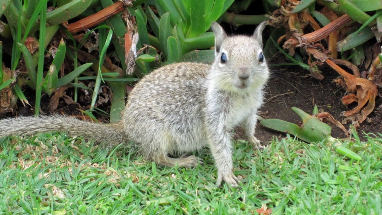 animals grass squirrels wallpaper