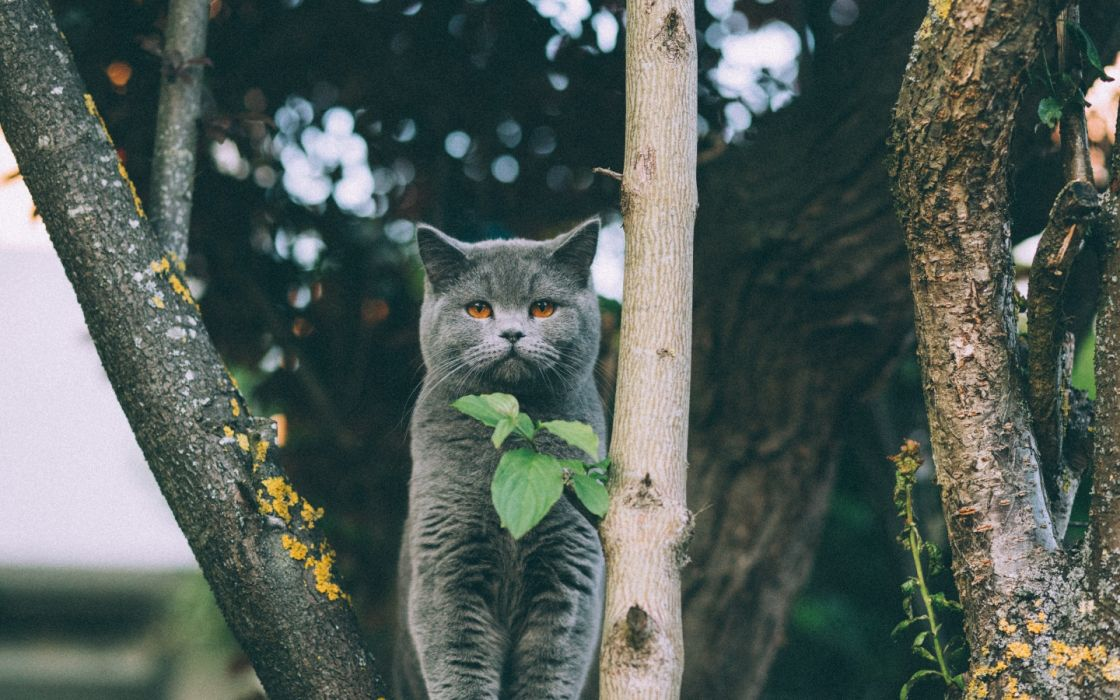 bokeh trees animals cats leaves nature widescreen wallpaper