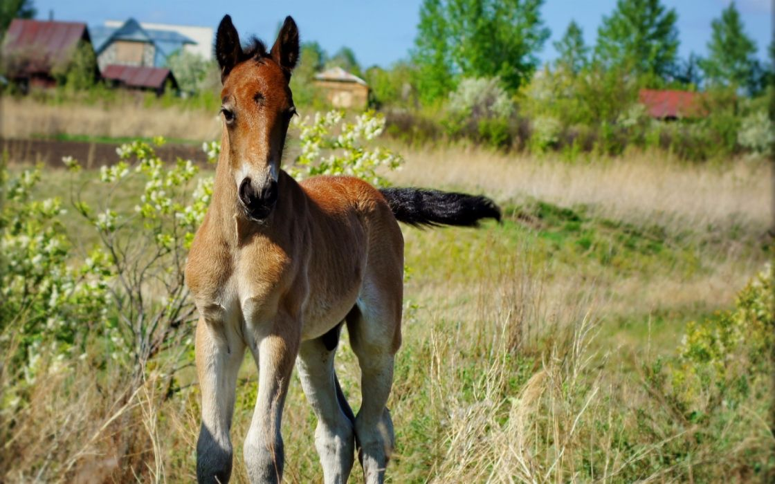 Horse baby countryside animals wallpaper
