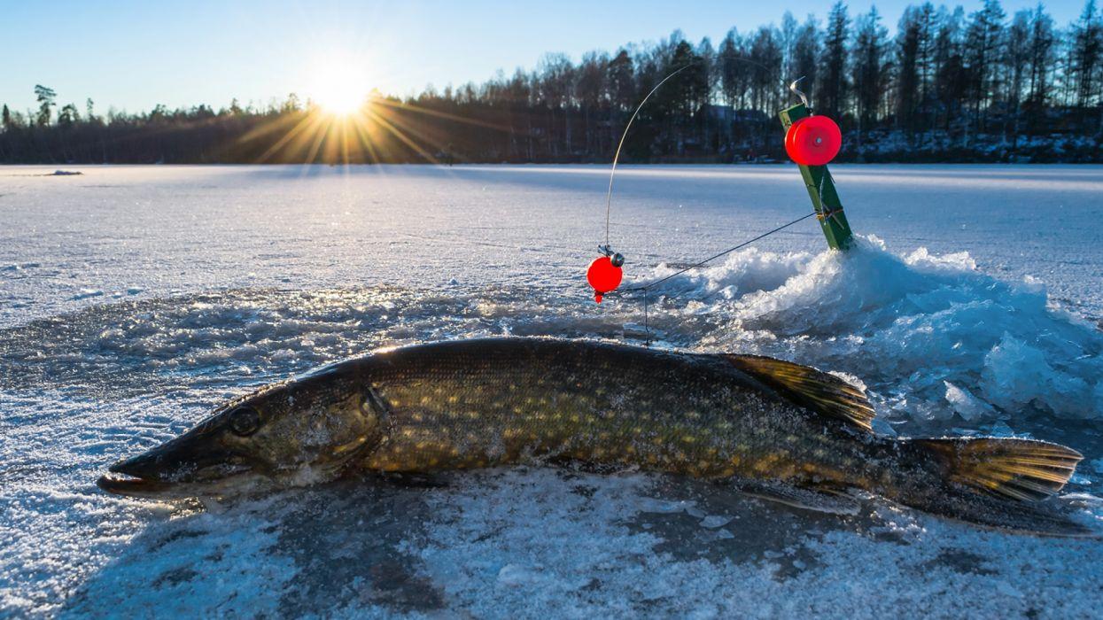 Fishing rod Ice animals wallpaper