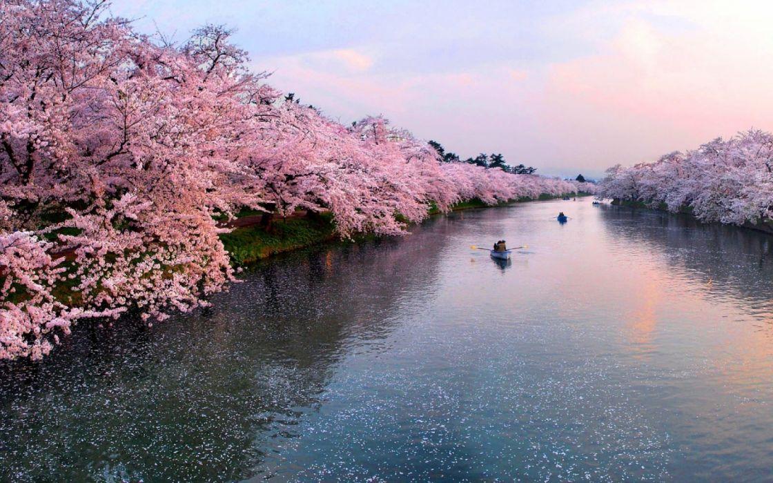 Cherry Rivers Hirosaki Castle wallpaper