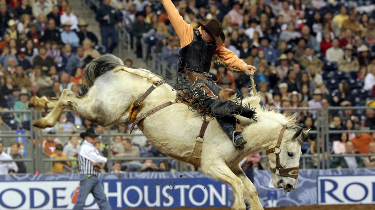 houston livestock show and rodeo holiday wallpaper